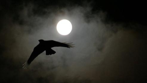 Nocturne_fevrier_de_masque